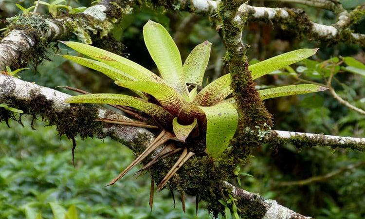 Seltene Pflanzen im Bergnebelwald