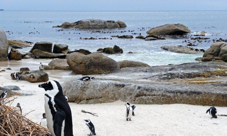 Wir besuchen die Pinguinkolonie