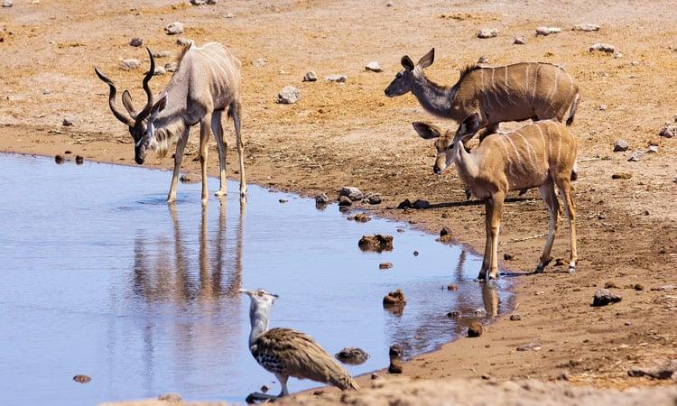 Tiere treffen sich an der Wasserstelle