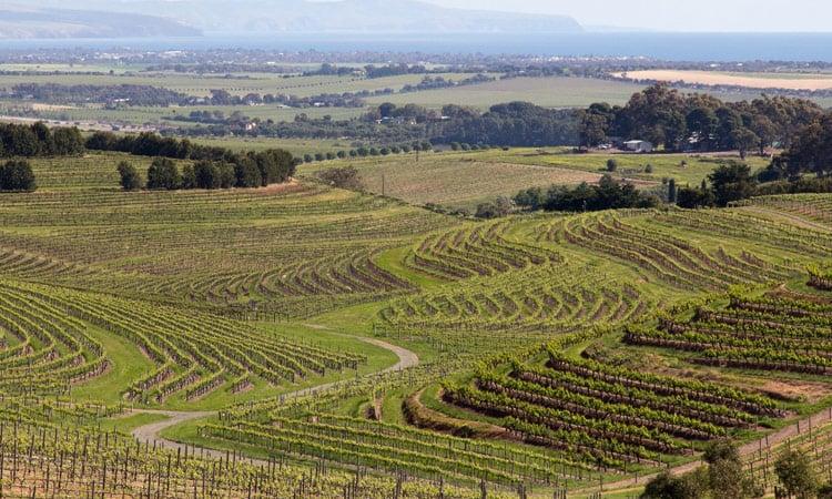 Das Weinanbaugebiet in Australien