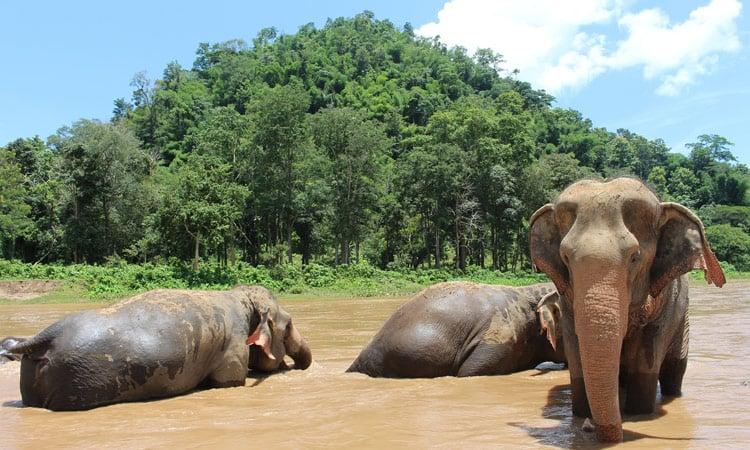 Am Elefantencamp