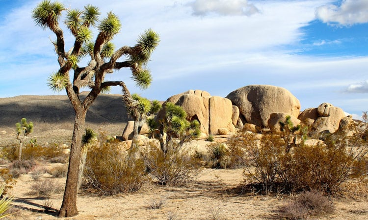 Der Joshua Tree National Park