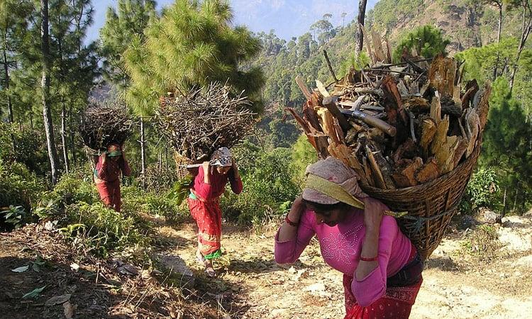 Nepalesische Frauen tragen Feuerholz