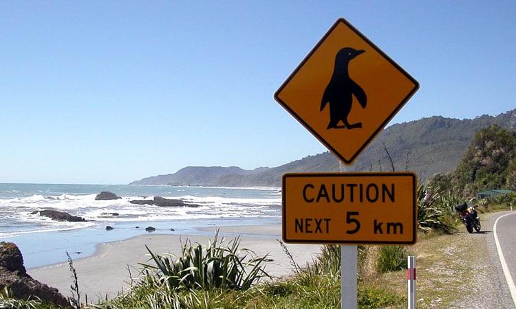 Achtung Pinguine