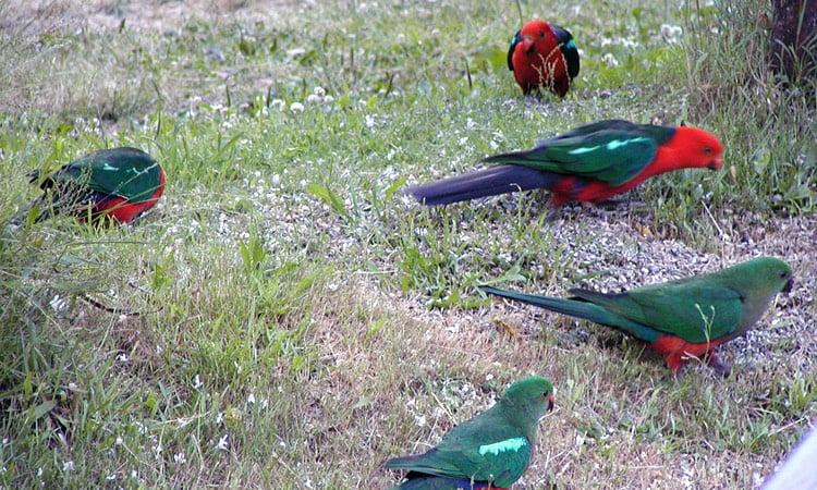 Eine Gruppe Papageien