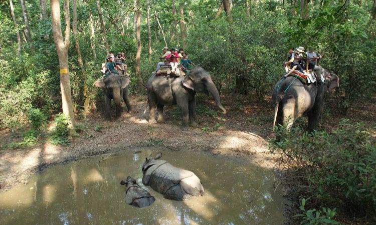 Auf den Elefanten reitend kommt man den Nashörnern ganz nah