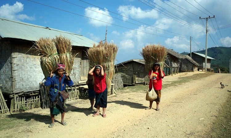 Farmerfrauen tragen Schilfgras