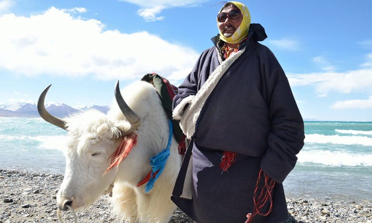 Tibeter mit weißen Yak am Lhamo Latso See