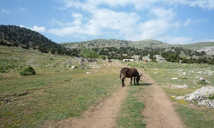 Esel auf dem Weg