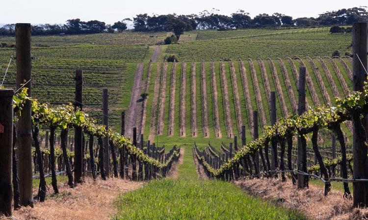 Barossa Valley Weinanbaugebiet