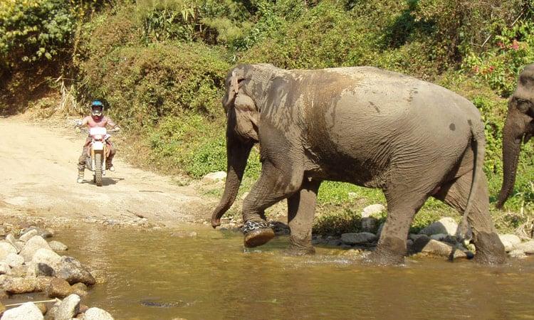 Elefanten haben immer Vorfahrt