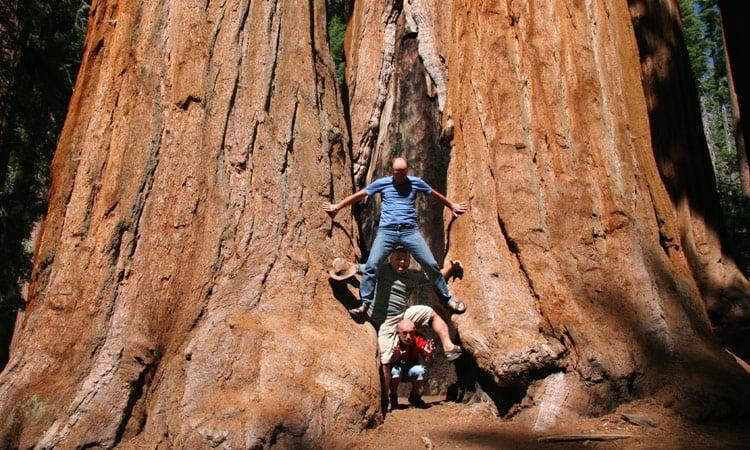 Sequoia Riesenbaum