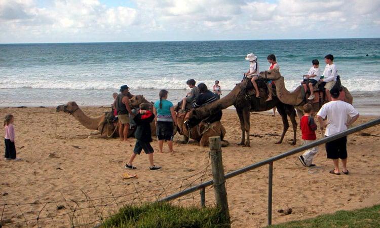 Kamelritt am Strand