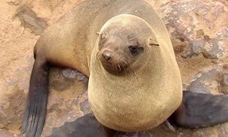 Wir besuchen die Robbenkolonie in Walfischbay