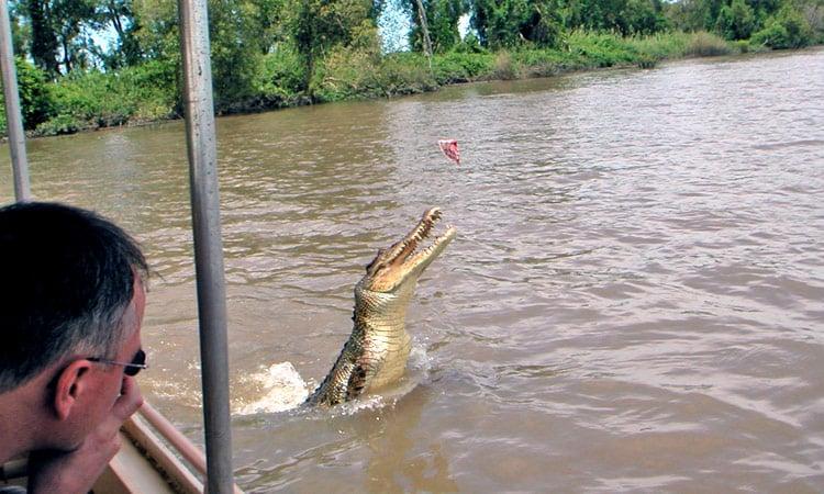Krokodil Fütterung als Touristenattraktion