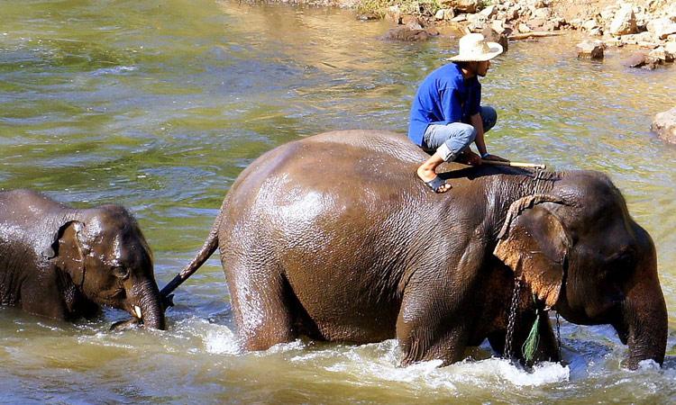 Wir besuchen das Elefanten Camp