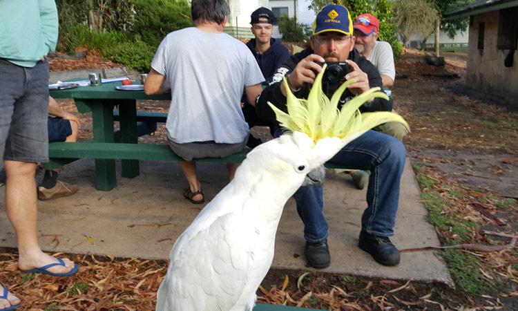 Ein Kakadu posiert