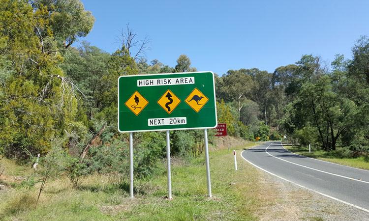 Vorsicht Kurven und Kangaroos