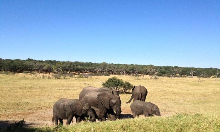 Eine Gruppe Elefanten im Krüger National Park