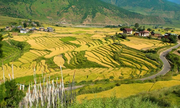 Bhutan typische Reisfelder