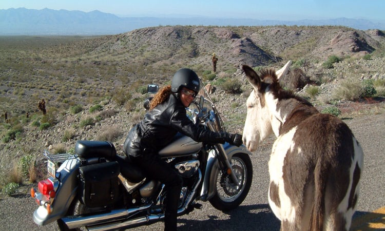 Wilde Esel am Oatman Pass