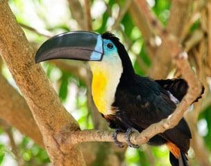 Honduras - El Salvador - von der Karibik zum Pazifik