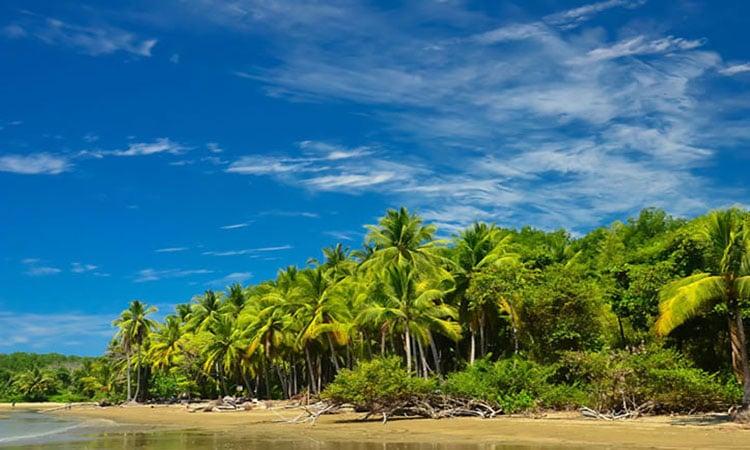 Palmenstrand Costa Rica