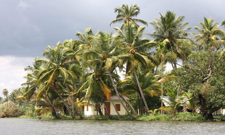 Kerala Palmenhain