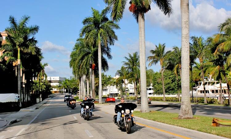 Palmen gesäumte Straße