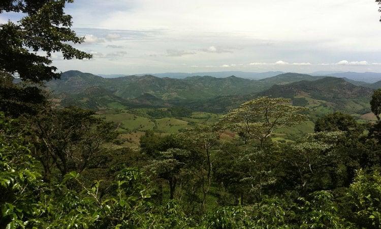 Blick über Kaffeeplantagen ins Tal